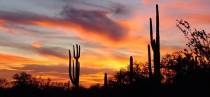 Exquisite Sunsets...One of the Many Reasons We Love the Sonoran Desert