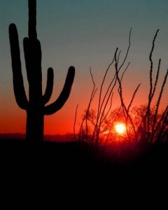 Fountain Hills Sunset, Saguaro Cactus, Ocotillo Cactus, Desert Southwest