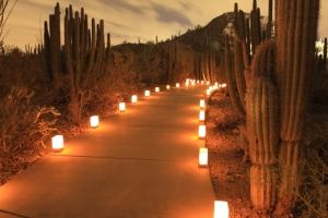 The Desert Botanical Garden presents its 35th year of Las Noches de las Luminaries