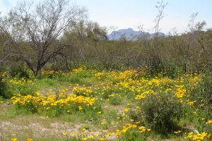 Enjoy the hikes through the Sonoran Desert with Ranger Amy.