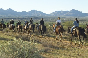 McDowell Mountain Adventures Horseback Riding