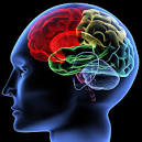 Brain wave PDF