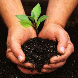 youth_gardening